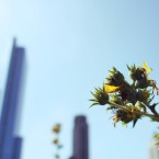 chicago allergies