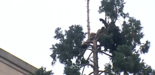 The mystery man was in the tree for more than 24 hours.