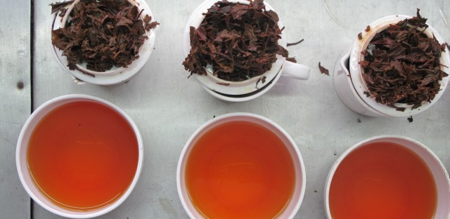 Early autumn flush teas ready for tasting in a Darjeeling garden. Each day's output is immediately sampled.  Autumn flush teas can run to bright amber, even burgundy, in color.