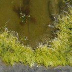 Algae blooms in Toledo