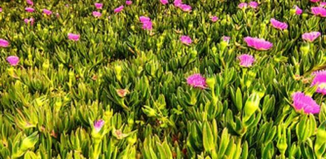 Community gardens with LaManda Joy