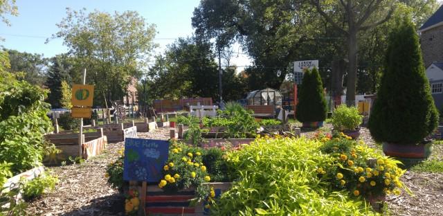 I Grow Chicago community garden