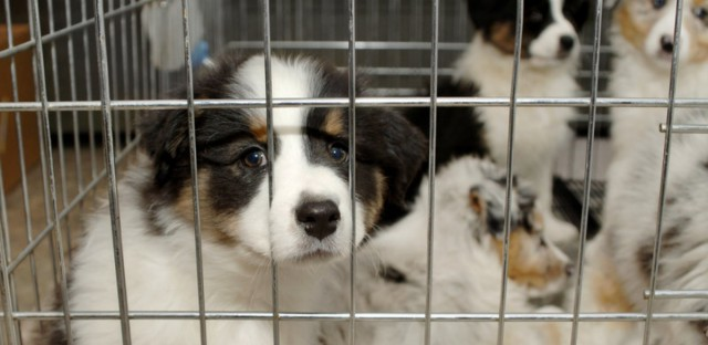 Campylobacter infections are common in dogs, cats and people.