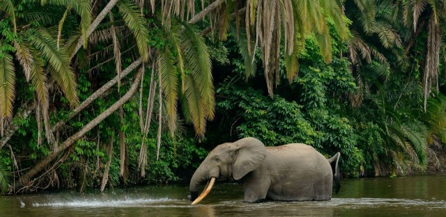 Planet Money : #932: Deep Learning With The Elephants Image