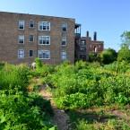 community garden vacant lot