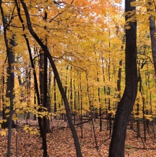 Cook County Forest Preserves