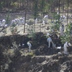 Peru environmental issues, and unexploded US ordnance in Laos