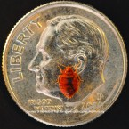 Bed Bug Dime