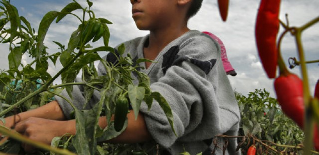 Investigation finds workers exploited on Mexican farms serving U.S. market