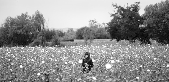 """A girl stands in the middle of a poppy field as Marines pass by on patrol. From the story """"In Afghanistan, Flowers Call The Shots,"""" 2011."""