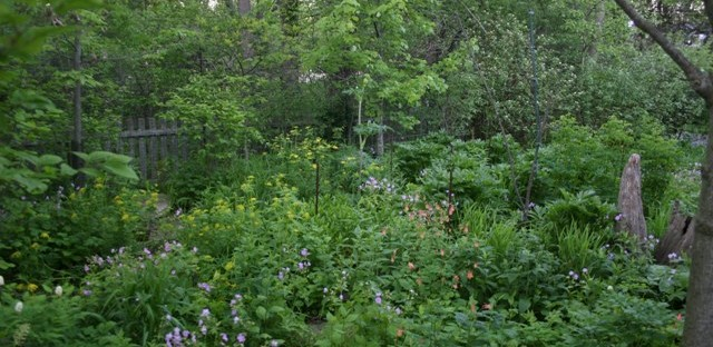 Rain garden at the home of landscape architect Cliff Miller.