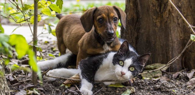 Illinois still doesn't have a state budget, but it may be getting an official state pet.