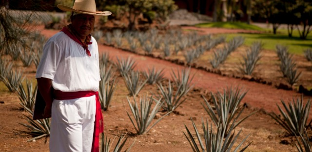In this photo taken Sept. 23, 2011, a man dressed as an agave cutter, known as a jimador, welcomes tourist at the Tequila Herradura factory in Amatitan, Mexico. The green mountain valleys surrounding Tequila are spotted with fields of blue agave, the plant that is fermented to make the drink. The vast fields and the large factories that distill the spirit have been declared a World Heritage Site, which generates local pride for a town that might otherwise be overlooked.