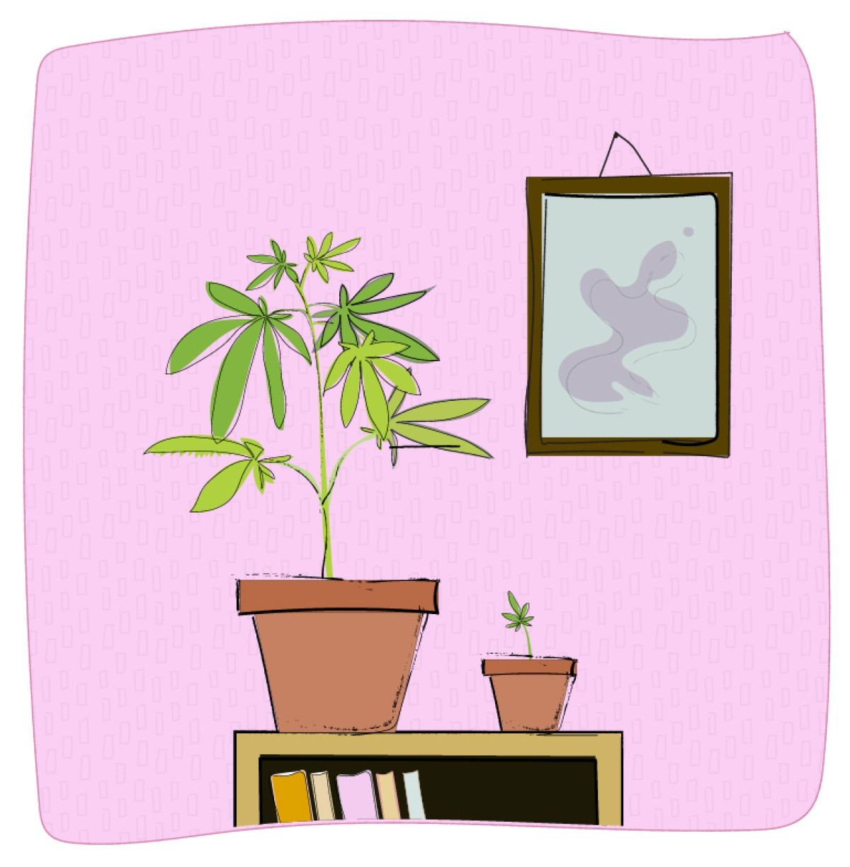 A marijuana plant in a nicely decorated home