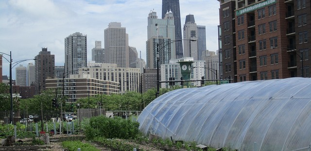 Chicago's urban farms have yet to harvest sustainable jobs, better health