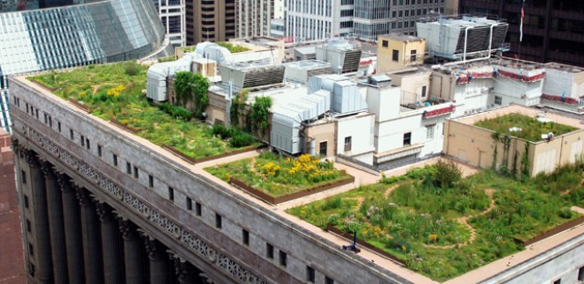 A rooftop garden atop Chicago's City Hall. Chicago has plants cooling 3 million square feet of rooftops throughout the city.