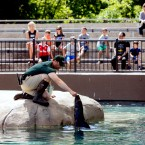 A trainer working with a sea lion at the Lincoln Park Zoo.