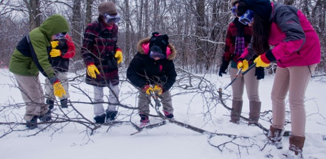 Kids cut up buckthorn, an invasive species.