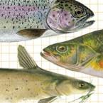 fishtopper