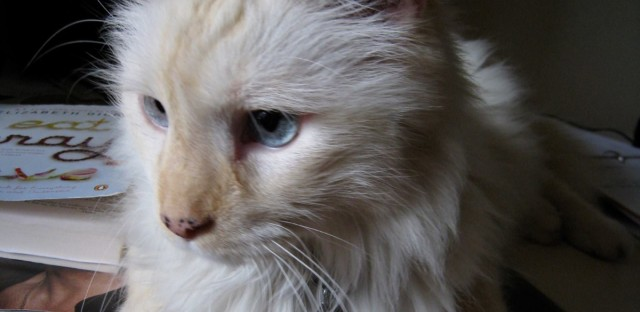 Zoe's kitty, Moe sits atop a neighbor's desk; Moe, was reading 'Eat, Pray, Love.'