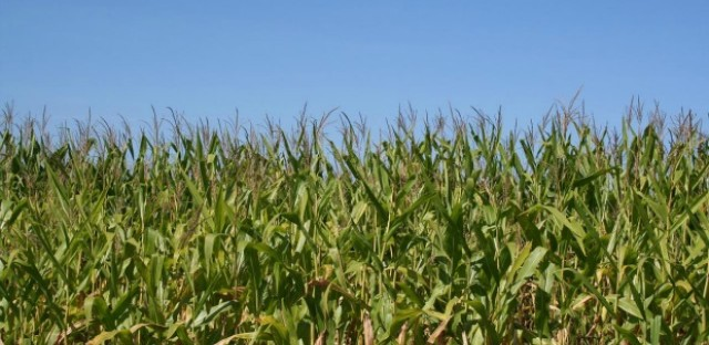 Wet weather not hurting Illinois farmers