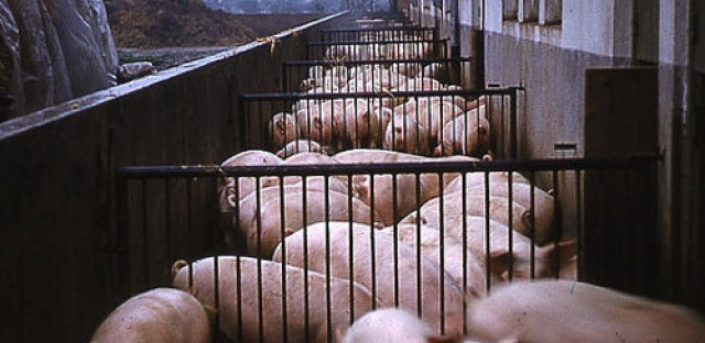 Antibiotics in livestock: Lessons from Denmark
