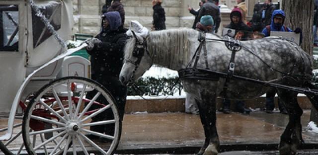 Chicago ordinance cracks down on smell of horse urine