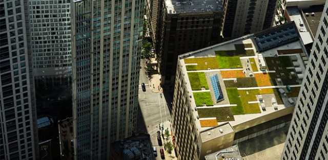 Urban Farm: Photo of the Day - August 1, 2013