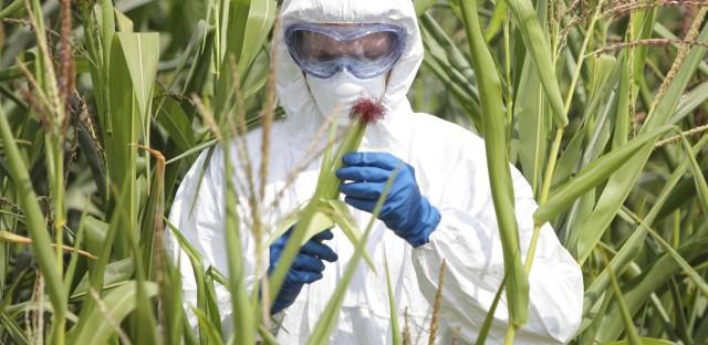 StarTalk Radio : Cosmic Queries: GMOs with Bill Nye (Part 1) Image