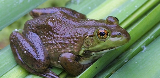 After Water: Invasive species and climate change a double threat for the Great Lakes