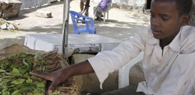 U.K. could ban khat, labels vegetable harmful