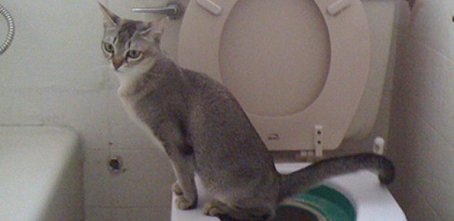 Learn how to toilet train your cat-the Charles Mingus way