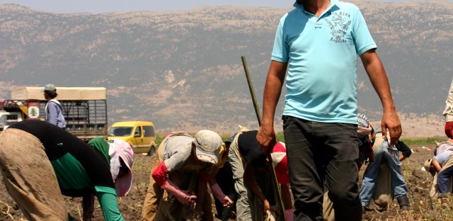 """Foreman Nazir Yassine keeps an eye on a crew of Syrian refugee children picking potatoes. Refugees and children are not legally allowed to work in Lebanon, but landowner Fadel Yassine, Nazir's father, defends employing them: """"What am I going to do? Let them starve?"""""""