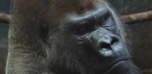 Clever Apes #28: The critter economy