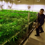 Medical Marijuana Verano Holdings