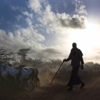 Issues on the table at the World Humanitarian Summit range from conflict zones to refugees. Above, a herder moves his goats at the Dadaab refugee camp, created nearly 25 years ago. The Kenyan government now threatens to shut it down.