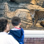 A family takes a look at a jaguar at the Lincoln Park Zoo on June 9, 2017.