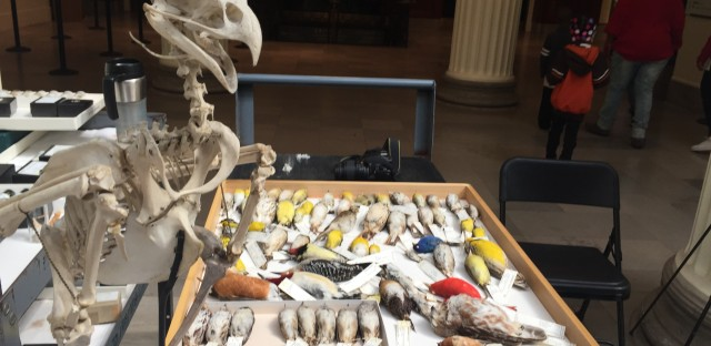 Natural history experts help people identify flora, fauna, and fossils