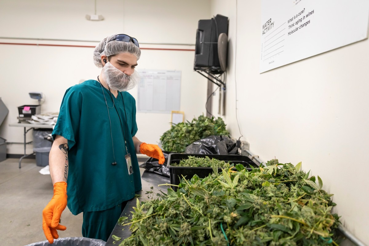 Weed Factory
