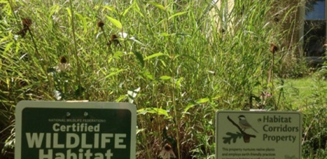 Learning to landscape with native plants