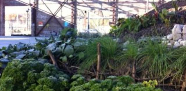 Aspiring urban gardener? Head to Toronto