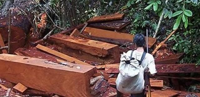 Anti-logging Peruvian activist Edwin Chota found murdered