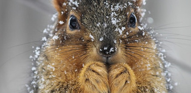 EcoMyths: Do wildlife need our help in winter?