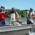 The drive to push invasive Asian Carp out of Illinois