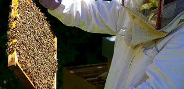 Morning Shift: Honeybee losses could impact our future