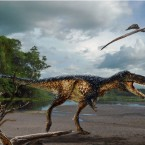 Horse-sized primitive tyrannosaur Timurlengia euotica from the middle Cretaceous (ca. 90-92 million years ago) of Uzbekistan. Image courtesy of Todd Marshall