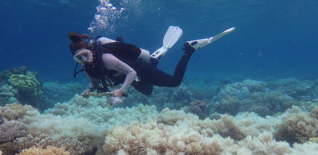 A diver near Australia's Orpheus Island surveys bleached Great Barrier Reef coral in March 2017.