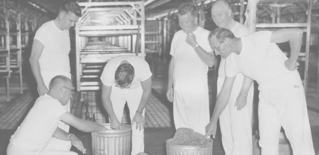Edward F. Knipling (right) and his colleagues inspect cans of ground meat where they grew screwworm flies.