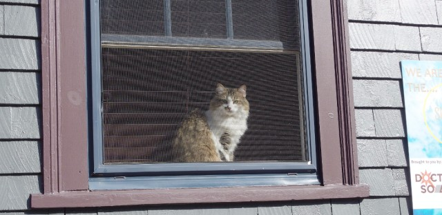 "Keep your cat away from windows while you're out of town, said one former burglar, ""Because who are they waiting on? You guys."""