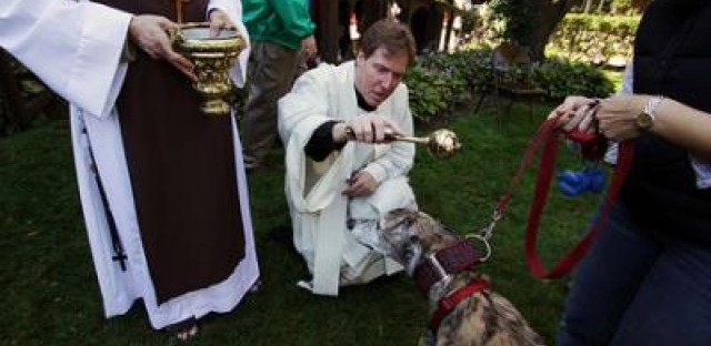 Dog bless you!